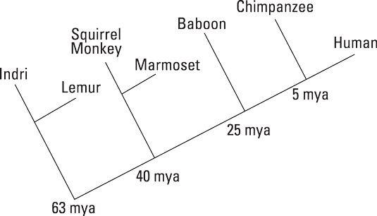 Ein cladogram.