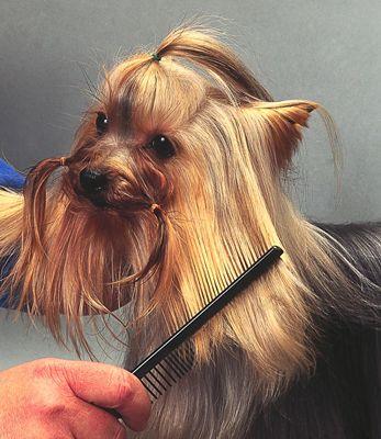 die Haarschneide macht es leichter zu steuern, während Bürsten.