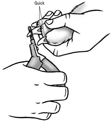 Achten Sie darauf, zu vermeiden, dass die schnelle Schneiden, wenn Sie den Nagel trimmen.