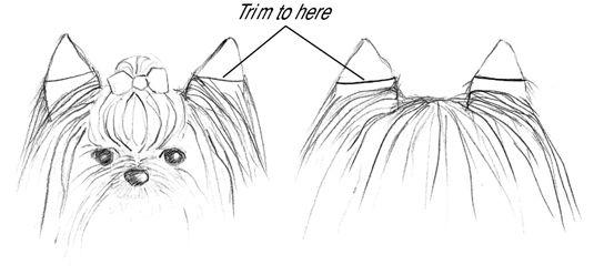 Schneiden Sie die Haare an den Ohren etwa die Hälfte der Weg nach unten auf der Vorder- und der Rückseite.