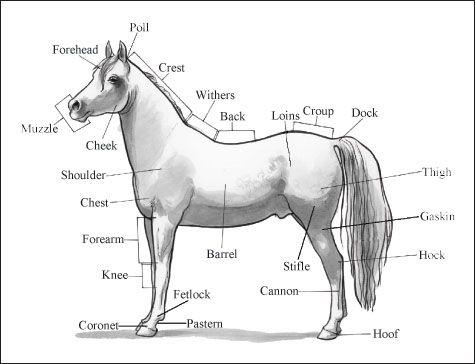 ���� - Identifizieren Pferdeteile und Beschriftungen