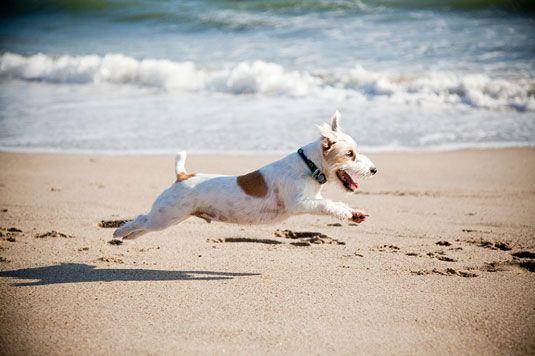���� - Stellen Sie Ihre Verschlussprioritätsmodus für Dog Action Shots
