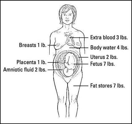 ���� - Wohin geht Ihre Schwangerschaft Gewicht?